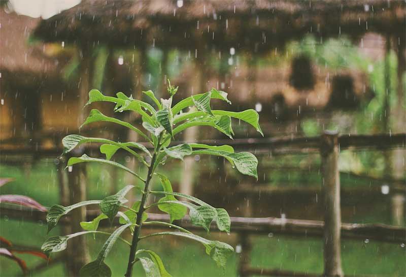 Magic of Monsoon in India