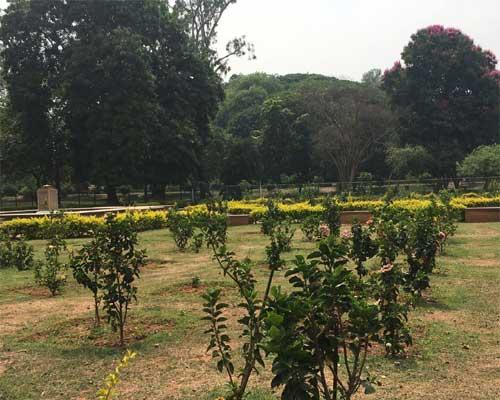 Rose Garden, Lal Bagh Bangalore