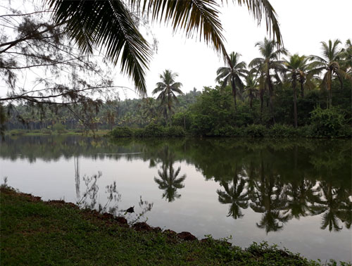 View of the serene Backwaters